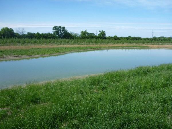 Bowen's Wetland