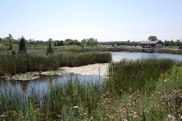 Dow Wetland