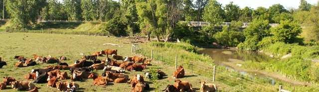 Fencing for Livestock