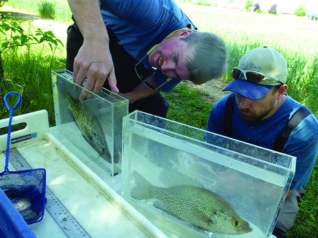 Sydenham River Watershed Species at Risk Newsletter