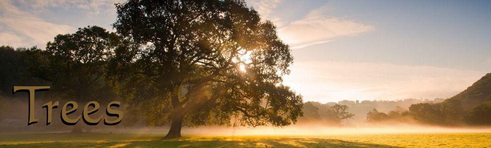 slide-memorial-tree