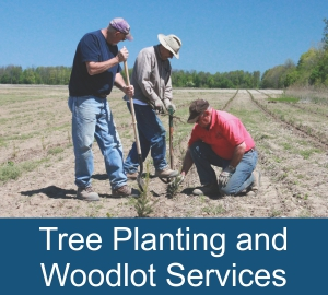 Tree Planting and Woodlot Services
